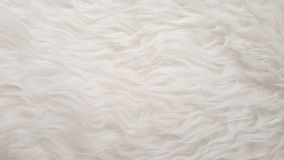 White Natural fluffy flat sheep pet skin texture backgrounds, material for carpet home decoration, leather textile industry Royalty Free Stock Images