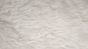 White Natural fluffy flat sheep pet skin texture backgrounds, material for carpet home decoration, leather textile industry Stock Photo