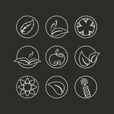 White natural symbols - nature abstract element with leaf, apple, flower and spikelet, bio organic simple design in the circle Stock Images