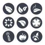 White natural symbols - nature abstract element with leaf, apple, flower and spikelet, bio organic simple design in the circle. Illustration stock illustration