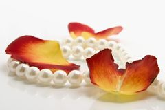 White necklace. White pearl necklace and petals of roses over white background Royalty Free Stock Photo