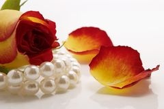 White necklace and rose. White pearl necklace petals of roses over white background Royalty Free Stock Photography