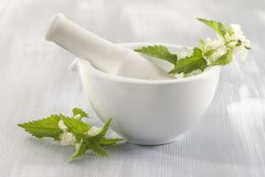 White nettle-plant medicinal Royalty Free Stock Photos
