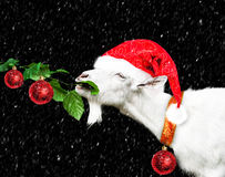 White new year goat in santa claus hat Stock Photography