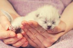 White newborn kitten Royalty Free Stock Photos