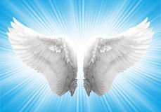 White ngel wing. White angel wing in blue background Stock Images