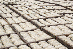 White noodles drying under the sun Stock Images