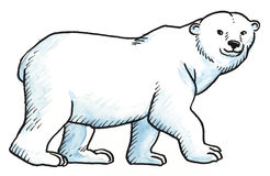 White northern bear Royalty Free Stock Photography