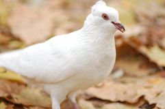 white nurkujący Zdjęcia Stock