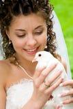 white nurkujący Zdjęcie Royalty Free