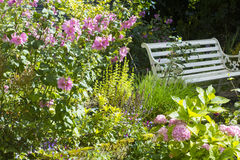 White old bench and pink Alcea rosea flowers Stock Photo