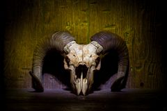 Free White Old Ram Skull On Yellow Wooden Wall Stock Image - 129156331