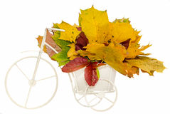 White old, vintage bicycle with basket filled with autumn colored leaves, isolated Stock Image
