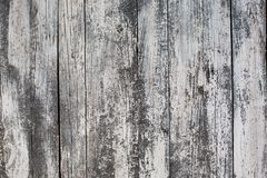 White old wood background,white texture background, stock image