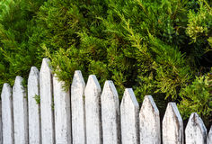White old wooden fence and pine trees. Royalty Free Stock Photos