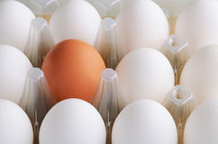 White and one brown eggs in tray horizontal. On the full backgrpound close-up Stock Photos