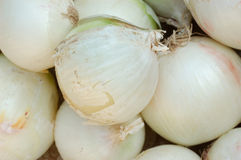 White Onion. A heap of white onion Stock Photos