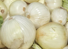 White Onion Royalty Free Stock Image