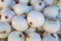 White onion bulb in market Royalty Free Stock Photo