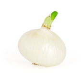White onion isolated on white. Background with clipping path Royalty Free Stock Images