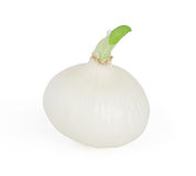 White onion isolated on white Royalty Free Stock Image