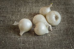 White onion on a napkin of burlap Royalty Free Stock Images