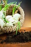 White onions Stock Photos
