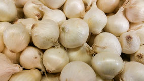 White onions in bin Stock Photography