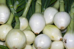 White onions on display Royalty Free Stock Photos