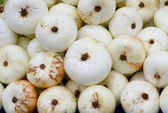 White onions on display Royalty Free Stock Images