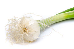 White onions with green stalks Royalty Free Stock Images