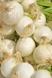 White onions. Some onions in the market. Agriculture and food concept Royalty Free Stock Images