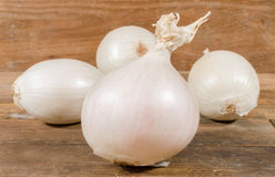 White onions Royalty Free Stock Images