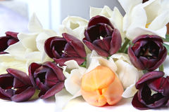 White, orange and black tulips Royalty Free Stock Images
