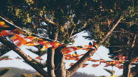 White and Orange Buntings on Tree during Day Stock Photography