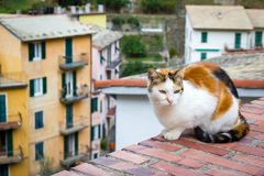 White and orange cat on a brick rooftop overlooking village of Manarola Italy Royalty Free Stock Photos