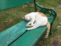 White and orange cat is sleeping in a park Royalty Free Stock Photography
