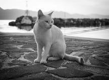 White/Orange cat walking on the beach in Greece stock photo