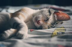 White Orange and Gray Tabby Cat Lying on Gray Textile Stock Photo