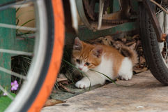 White-orange homeless kitten staring and crouching beside the st Stock Images