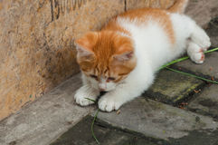 White-orange homeless kitten staring and crouching beside the st Royalty Free Stock Images