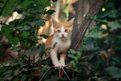 White and orange kitten in the tree Stock Photo