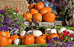 White and Orange Pumpkin Fall Still Life Stock Photo