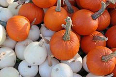 White and orange pumpkins. In a random pile ready for sale Stock Photography