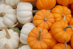 White and orange small pumpkins Royalty Free Stock Photos