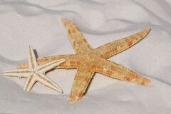 White and Orange Star Fish Side by Side at the Sand Stock Photography