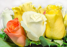 White, orange and yellow rose flowers, details, close up Royalty Free Stock Photo