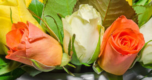 White, orange and yellow rose flowers, details, close up Stock Photos