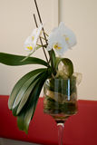 White orchid. In glass chalice Stock Photo