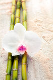 White orchid and bamboo on beach sand Stock Image